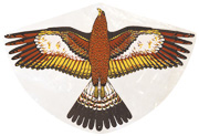 Golden eagle bird scaring kite