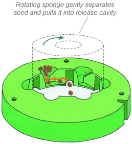 Seed Spider seeding system